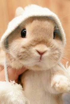 Learn About Pet Rabbit - Page 26 of 28 - Gloria Love Pets So Cute Baby, Cute Baby Bunnies, Baby Animals Super Cute, Cute Little Animals, Cute Funny Animals, Cute Babies, Cute Sheep, Cute Bunny Pictures, Baby Animals Pictures