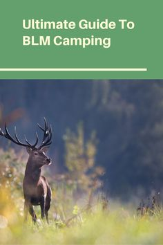 Diy Camping, Outdoor Camping, Wilderness First Aid, First Aid Classes, Satellite Phone, Making Water, Bureau Of Land Management, Tent Campers, Camping Supplies