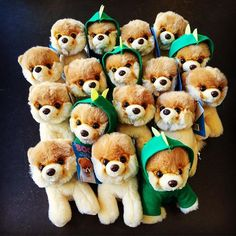 Itty Bitty Boo is always happy to meet some new friends. Perfect little plush for collectors, or for a cute giveaway or goody bag. Funny Animal Pictures, Funny Animals, Boo And Buddy, World Cutest Dog, Baby Corner, Pokemon Plush, Plush Animals, Goodie Bags, Cute Dogs