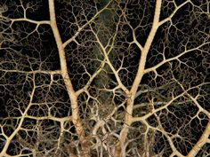 Patterns in nature by National Geographic