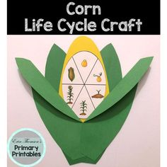 Corn Life Cycle Craft Craft includes: life cycle charts (with and without pictures) corn cob husks Elementary Science, Teaching Science, Science Activities, Elementary Schools, Cycle Pictures, Life Cycle Craft, Corn Cob, Cut And Paste, Life Cycles