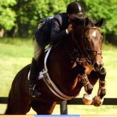 The Upperville Horse Show (the oldest horse show in the country!) runs Monday, June through Sunday, June English Riding, The Big Four, Wine Festival, Local Events, Horse Love, Show Horses, Horse Riding, Four Legged, Holidays And Events