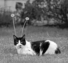 #cats #chat #photography #photographie #black #white #blackandwhite #noir #blanc #noiretblanc