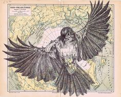 Marc Powell : bic biro drawing on antique map.