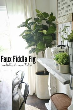 Faux fiddle fig - gr