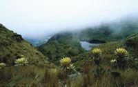 Frailejonal pajonal en laderas escarpadas alrededor de la laguna de Iguaque.