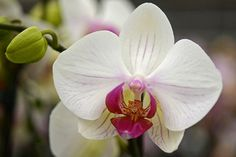 How to Grow and Care for the Orchid Flower in Containers.