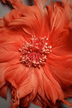 quenalbertini: Whispers of Coral Coral Color, Orange Color, Light Orange, Color Of The Year, All The Colors, Orange Twist, Vintage Inspired Wedding Dresses, Live Coral, Orange You Glad