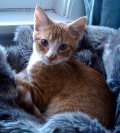 Charlie the kitten