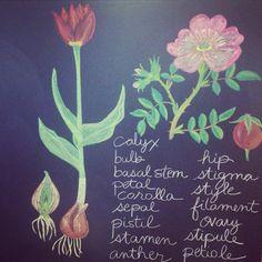 The Waldorf School of Philadelphia Fifth grade botany studies