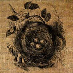 Bird Birds Nest Eggs Overhead Digital Image Download Transfer To Pillows Tote Tea Towels Burlap No. 1723