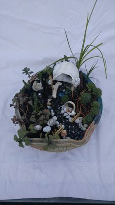 """Welcome to Whitley's. The planter is a gorgeous, hand thrown clay bowl about 8""""x10""""x 3"""", filled with charm and Whimsy."""