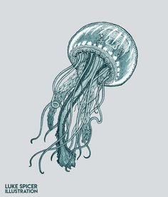 Jellyfish, ink and watercolour, 2013.