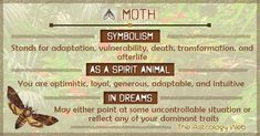 Moth Meaning and Symbolism Butterfly Spirit Animal, Spirit Animal Totem, Animal Spirit Guides, Animal Totems, Moth Tattoo Meaning, Luna Moth Symbolism, Animal Symbolism, Animal Meanings, Magick