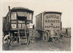 Circus wagons
