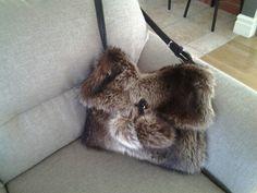 Chat sauvage et cuir   a vendre