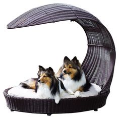 Outdoor Dog Chaise Lounge-This amazing chaise might outshine your human patio furniture from Outdoor pet beds, chic pet beds, modern pet beds, contemporary pet beds Cool Dog Beds, Cool Pets, Unusual Animals, Cute Animals, Unusual Pets, Outdoor Dog Bed, Indoor Outdoor, Outdoor Shade, Outdoor Lounge
