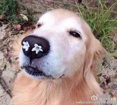 nose flowers dog
