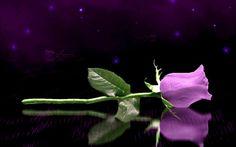 Ask Psychic Online, Call, WhatsApp: Spiritual Medium, Spiritual Healer, Spiritual Life, Spirituality, Psychic Love Reading, Phone Psychic, Celebrity Psychic, Medium Readings, Mending A Broken Heart