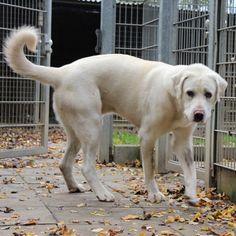 Enzo sucht ein Hunderfahrenes großes Zuhause Tierheim Heppenheim
