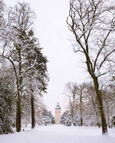 Karlsruhe Palace in snow Black Forest Germany, Maybe Someday, Places Ive Been, Palace, Travel Photography, Snow, Sweet, Wanderlust, Outdoor