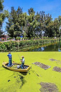Trabajo de limpieza y mantenimiento del Canal Nacional. En la lancha, Edmundo López de la Rosa y Gustavo Ríos Monroy
