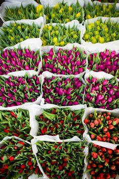flower boom by Elena Karelova on 500px