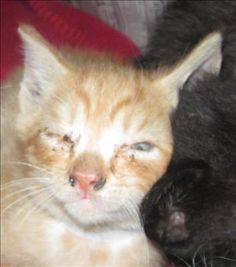 Primary Color: Orange Tabby - Please someone step up and save this little kitten.  Medical attention is needed! He will love you forever.  Please hurry a High Kill Shelter! Paulding County GA