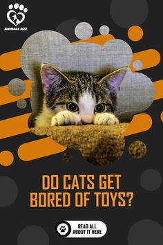 🐱❤🐱 Cats can also get bored with his toys so it's best to give them a variety of toys especially if you're not always around. 🐱❤🐱 Animals A2Z Homemade Cat Toys, Diy Cat Toys, Cat Friendly Plants, Best Interactive Cat Toys, Cat Playground, Lots Of Cats, Cat Behavior, Cat Facts, Love Pet