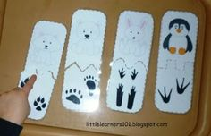 Little Learners: Polar Animals