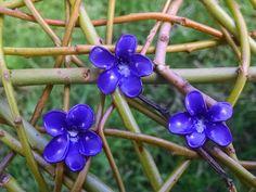 Common Violet purple Everlasting Ephemerals by RosaMysticaArts