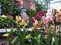 Orquídeas, palmeras, plantas para jardines verticales, terrariums.... Begonia, Garden Centre, Natural, Plants, Environment, Indoor Plants, Rose Trees, Palm Trees, Calla Lilies