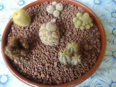 Crea pequeño jardines de corcho para tu nevera