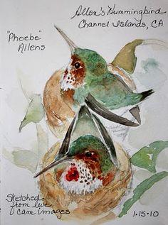 Sketching in Nature: sketchbook