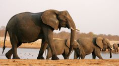 US President Donald Trump delays decision on elephant trophy imports after outcry