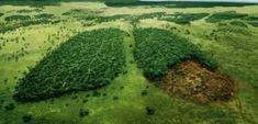 Brazil's Leading Presidential Candidate Vows To Cut Down Rainforest to Make Way for Agriculture Agriculture, Rainforest Destruction, Organisation Des Nations Unies, Image Citation, Single Tree, Environmental Art, Presidential Candidates, Earth Day, Lunges