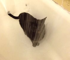 finicky cat trying to find the right stream of water (gif)