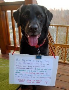 source:  Facebook, A newly created page for special needs animals