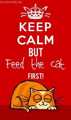 Mantén la calma pero... primero alimenta al gato  ღ✿´¯`*•.¸¸✿ღღ✿´¯`*•.¸¸✿ღღ✿