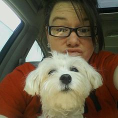 This two year old #Maltese is #missing from #Columbia #MO. He lives at St. Charles Road and Mo. Route Z. family let him out at 7am Tuesday, 1-8-13. They have other dogs, so they were wandering by the road a bit, and he may have been mistaken for a stray, even though wearing a collar. His name is Tucker, and he's her baby boy. All of us with pets of our own know that they are our kids!!!!! Please, help us find him! You can message me on Facebook, comment here or call me at 573-874-8768…