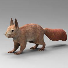 Squirrel Sguirrel Max - 3D Model