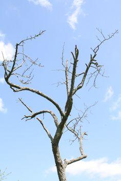 ex-Baum