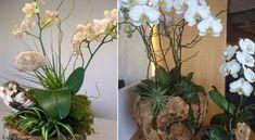Soha nem gondoltam volna, hogy az orchideát így is el lehet ültetni! - Ketkes.com Indoor Plants, Helpful Hints, Garden, Flowers, Tips, Plant, Inside Plants, Useful Tips, Garten