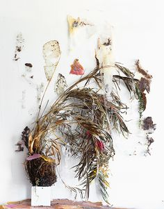Desiccation of an Arecaceae (Fold), Archival Pigment Print, 38 x 46 inches, + 2 AP British Shop, Flower Petals, Flowers, Collage Background, Flower Bomb, Museum Of Contemporary Art, Environmental Design, Painting Inspiration, Eye Candy
