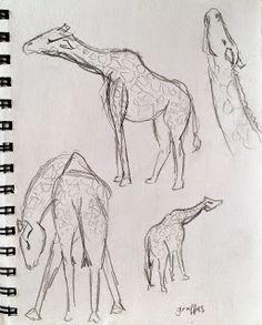 Giraffes at Blair Drummond Safari Park Sketchbook Drawings, Sketching, Observational Drawing, Draw Animals, Giraffes, Drawing Ideas, Safari, Charcoal, Animation