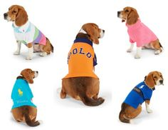 Super cute Polo shirts for dogs...great deals and perfect holiday gift ideas!