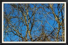 https://flic.kr/p/qUfpsG | Beauty Among The Noise | Even on quite winter days, a multitude of branches can obscure the landscape and hide little elements of life and hope for spring.