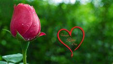 Happy-rose-day-pink-beautiful-rose-image