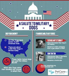 Salute to Military Dogs - Infographic   PetCareRx