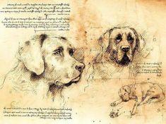Il disegno del cane